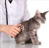 Ветеринарные клиники в Дарасуне